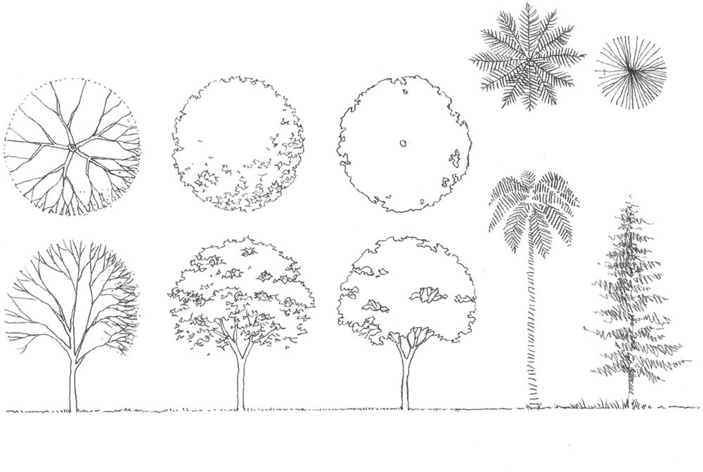 copaci_in_creion_drawing_architecture_hand_sketch_trees